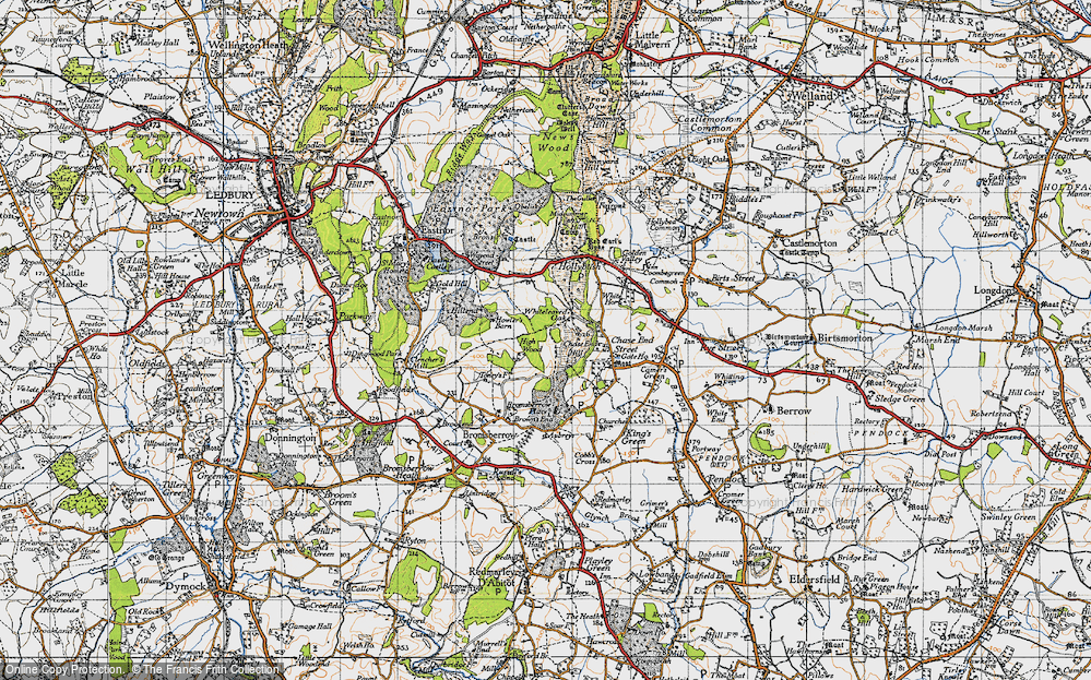 Whiteleaved Oak, 1947