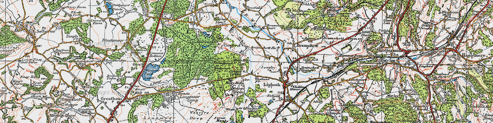 Old map of Woolmer Forest in 1919